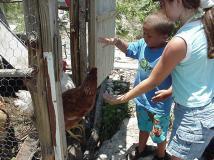 Bryan's Chicken Coop